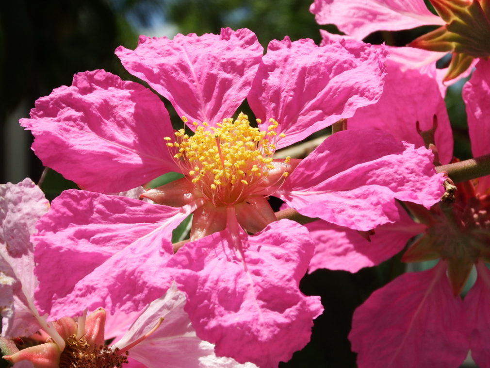 Pink flower … every living thing has a mirror likeness inherited from its predecessors