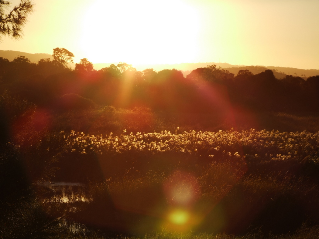 Flowers and Grasses at Sunset, Robina